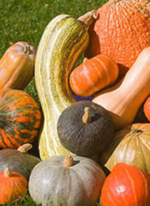Winter Squash - Fall Veggies